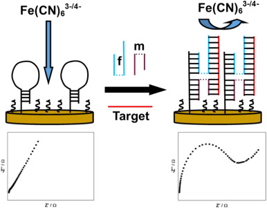 A universal and label-free impedimetric biosensing platform for discrimination of single nucleotide substitutions in long nucleic acid strands